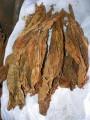 Tani tytoń BURLEY