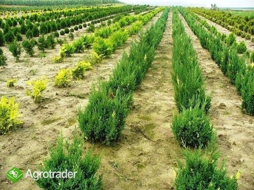 Krzewy ozdobne - ponad 280 odmian ! - zdjęcie 2