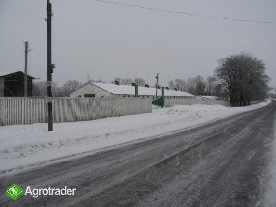 Ukraina.Gospodarstwo rolne,ferma trzody chlewnej. - zdjęcie 4