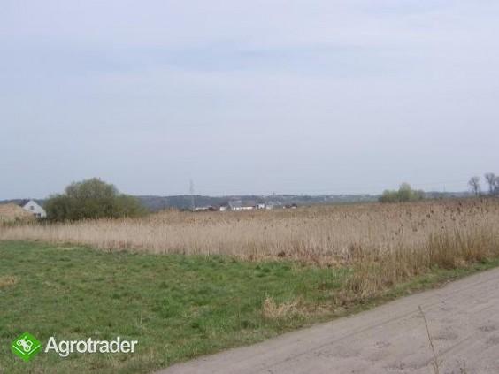 Dzialka 2,6ha z morzliwoscia podzialu w Gorzowie. - zdjęcie 4