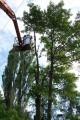 Wycinka drzew ŁÓDŹ porządkowanie terenu F-Vat
