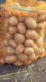 Sprzedam ziemniaki jadalne SATINA i CEKIN