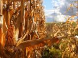 Ziemia orna , Gospodarstwo rolne 420 hektarów ,