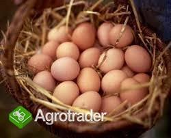 Jajka z wolnego wybiegu - SIEMIATYCZE