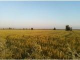 sprzedam 70 hektarów , gospodarstwo rolne