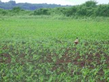 Sprzedajemy ziemie rolna w Europie Srodkowej dla rolnikow, inwestorow