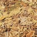 TANIO - Najlepsze liście tytoniu - 535 911 831