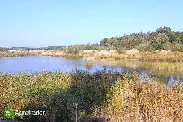 30 ha, Biskupice koło Sycowa, dolnośląskie - zdjęcie 1