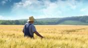 Ziemia Rolna okolice Zielonej Góry