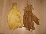Liście tytoniu Virginia, Buley, Skroniowski Małopolskie