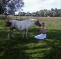 zamienie klacz kucyk na kozy ,owce ,jałówkę ,krowę