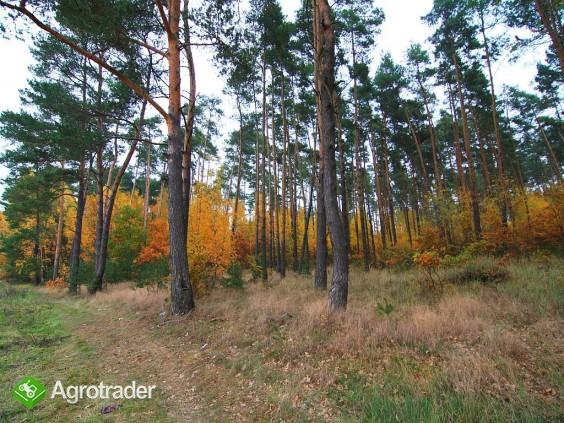 Grunty rolne, V i VI kl, koło Sycowa (dolnośląskie) - zdjęcie 4