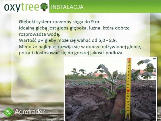 Oxytree - drzewo rosnących korzyści ( gleba: IV-VI klasa)