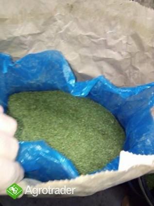 suszona natka pietruszki od rolnika duża ilość dobra jakość - zdjęcie 1