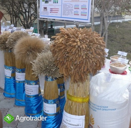 Ukraina. Sloma, siano, surowcy produkcji rolniczej. Od 70 zl/tona.