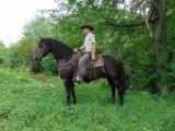 koń friesian na sprzedaż