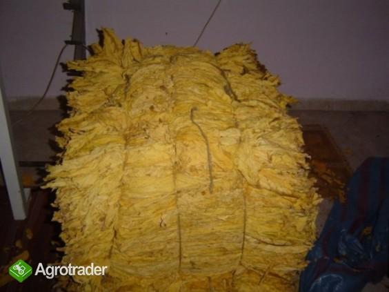 Liście tytoniu virginia oraz burley TEGOROCZNE HURT