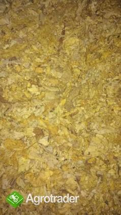 Liscie tytoniu . cale strips blend scraps dowoz