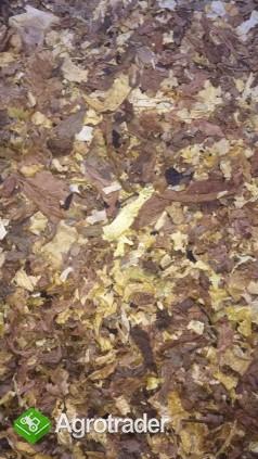 Liscie tytoniu . cale strips blend scraps dowoz - zdjęcie 2