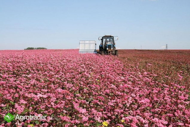 Ukraina. Gospodarstwo rolne, grunty pod uprawe drzew owocowych,wierzby
