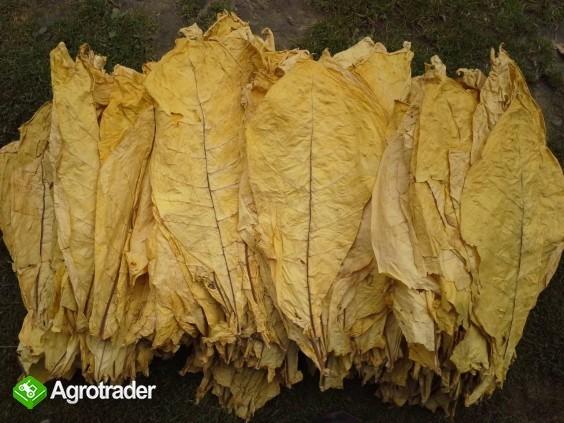 liście tytoniu Virginia tobacco leaves for sale price per kilo 1kg=3€ - zdjęcie 3