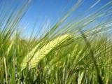 Gospodarstwo Rolne 450 ha - odstapię