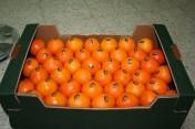 sprzedam pomarancze
