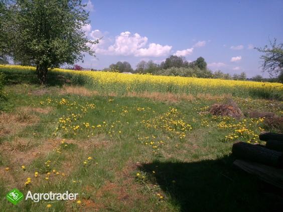 Sprzedam gospodarstwo rolne Gołębie (okolice Nasielska) - zdjęcie 4