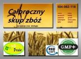 Skup zbóż całoroczny