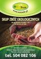 kupię ekologiczne pszenżyto- skup ekologicznego pszenżyta