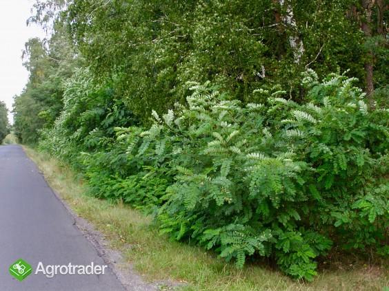 Sprzedam las blisko S17 - zdjęcie 1