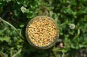 Sprzedam pyłek pszczeli z własnej pasieki hurtowo