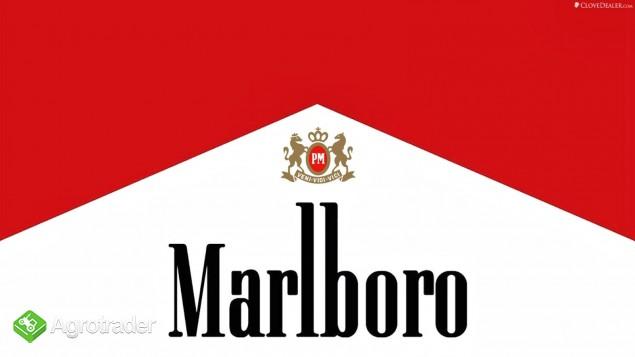 575384047 najlepszy tytoń ! american blend camel marlboro route cheste