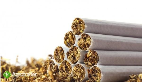 tytoń kg papierosowy 65zł KG-ODBIOR OSOBISTY,WYSYŁKA  736-903-355 - zdjęcie 2