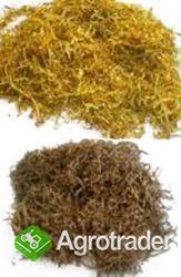 tyton lekki wydajny 65zł kg smak prawdziwego papierosa - zdjęcie 1
