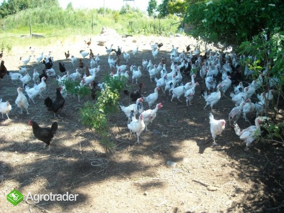 Jaja ekologiczne w ciągłej sprzedaży - zdjęcie 1