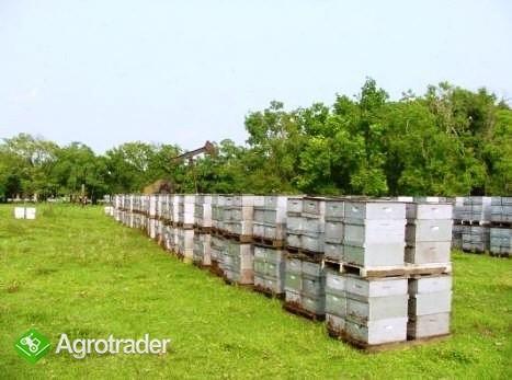 Ukraina.Gospodarstwa+grunty rolne,lesne,inwestycje - zdjęcie 5