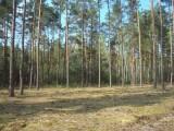 Sprzedam działki w lesie z prawem zabudowy