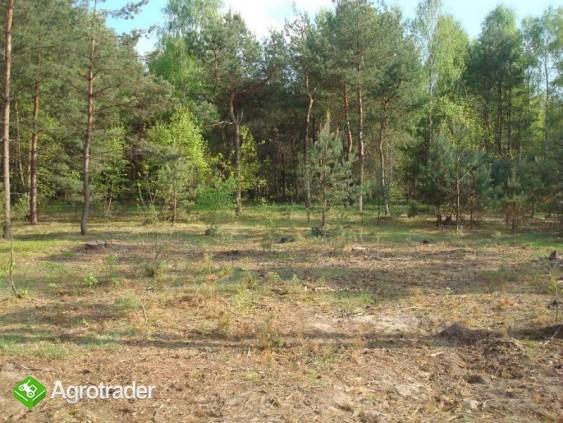 Sprzedam działki w lesie z prawem zabudowy - zdjęcie 2