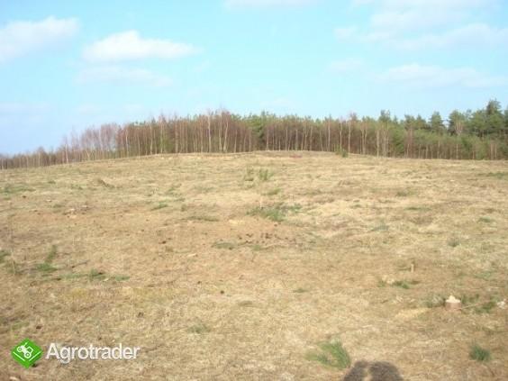 Gołczewo ziemia na sprzedaż - zdjęcie 1