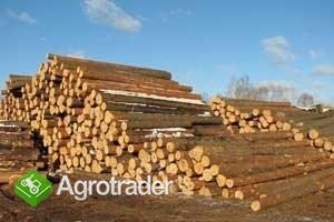 Ukraina.Drewno z Lasow Panstwowych.Cena 15 zl/m3