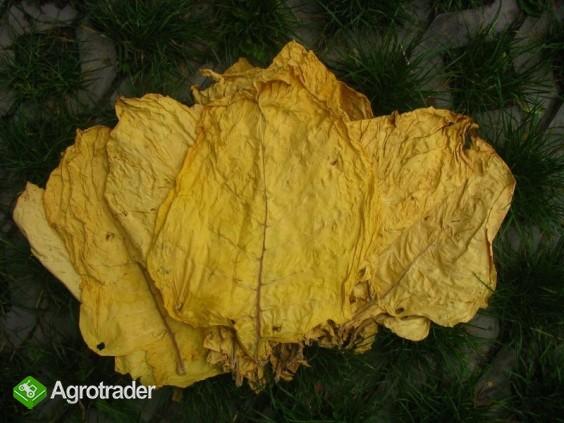 tytoń-liście tytoniu virginia i burley -klasa I