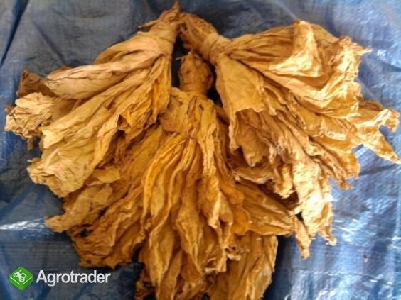 Liście Tytoniu Virginia & Burley wysyłka 24 H - zdjęcie 1