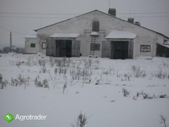 Ukraina.Gospodrstwo rolneFermaTrzody45km od Kijowa - zdjęcie 1